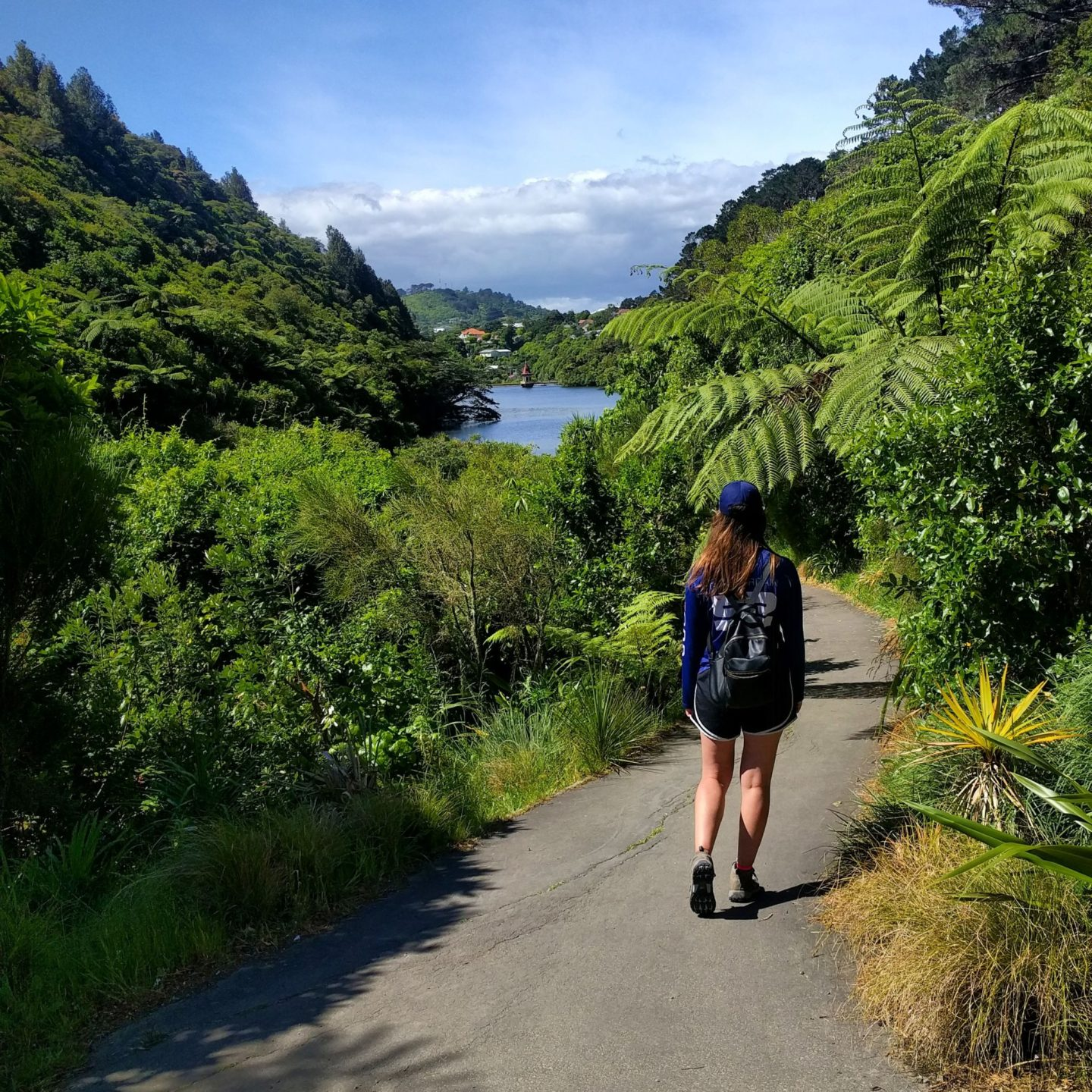 Zealandia Wellington by Real World Runaway